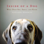 Inside-of-a-Dog-cover