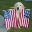 flagdog-150x150