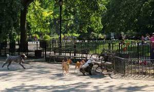nyc_dog_park1