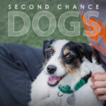 ASPCA Second Chance Dogs poster