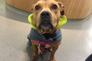 Franny, Graduate, Canine Rehab Center | New York City Dog