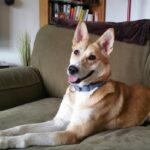ASPCA Canine Rehab Center Graduate   New York City Dog