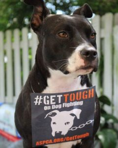 Get Tough On Dog Fighting | New York City Dog