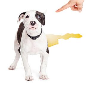 Pet Stains Happen   New York City Dog