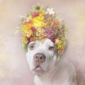Flower Power Sophie Gamand | New York City Dog