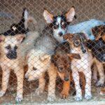 puppymill
